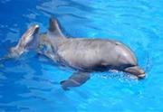 Blue Dolphin Tour