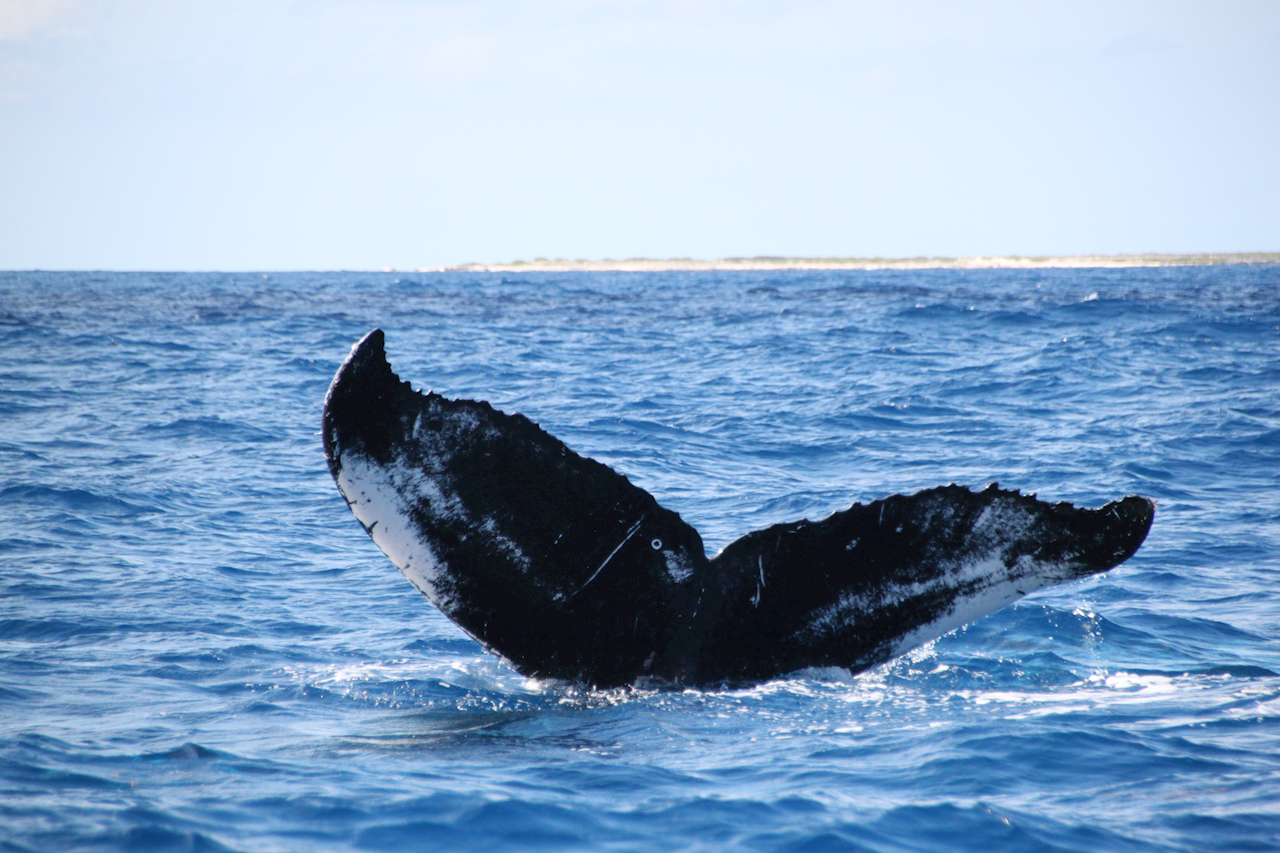 Private Whale Watching Charter in Grand Turk