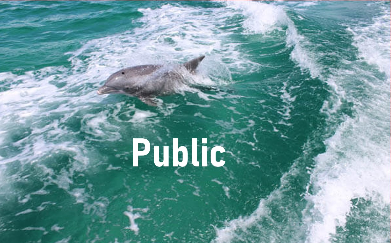 Dolphin and Eco Trip