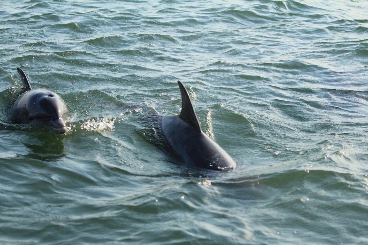 Dolphin Watching Cruise. PP
